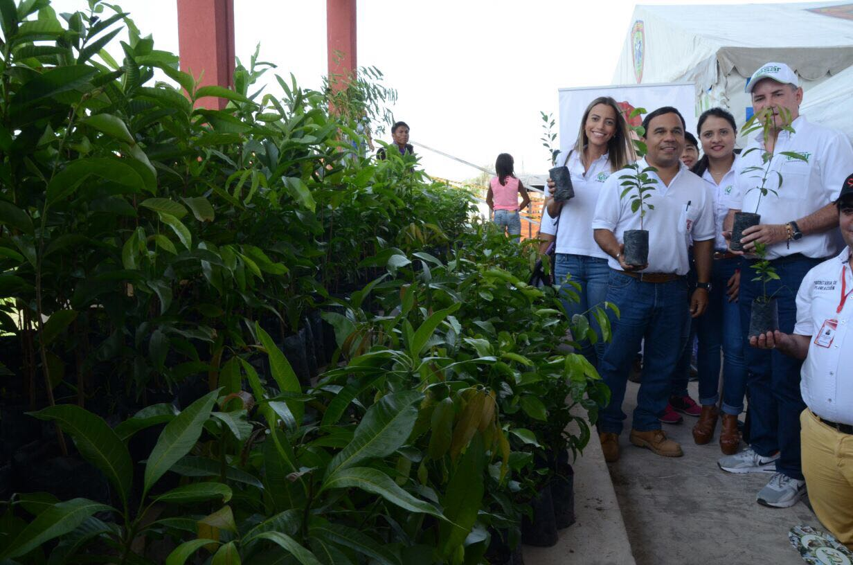 *En la fotografía Francisco Ovalle Angarita, Gobernador del Cesar,recibiendo la donación de árboles frutales de parte de Drummond Ltd.
