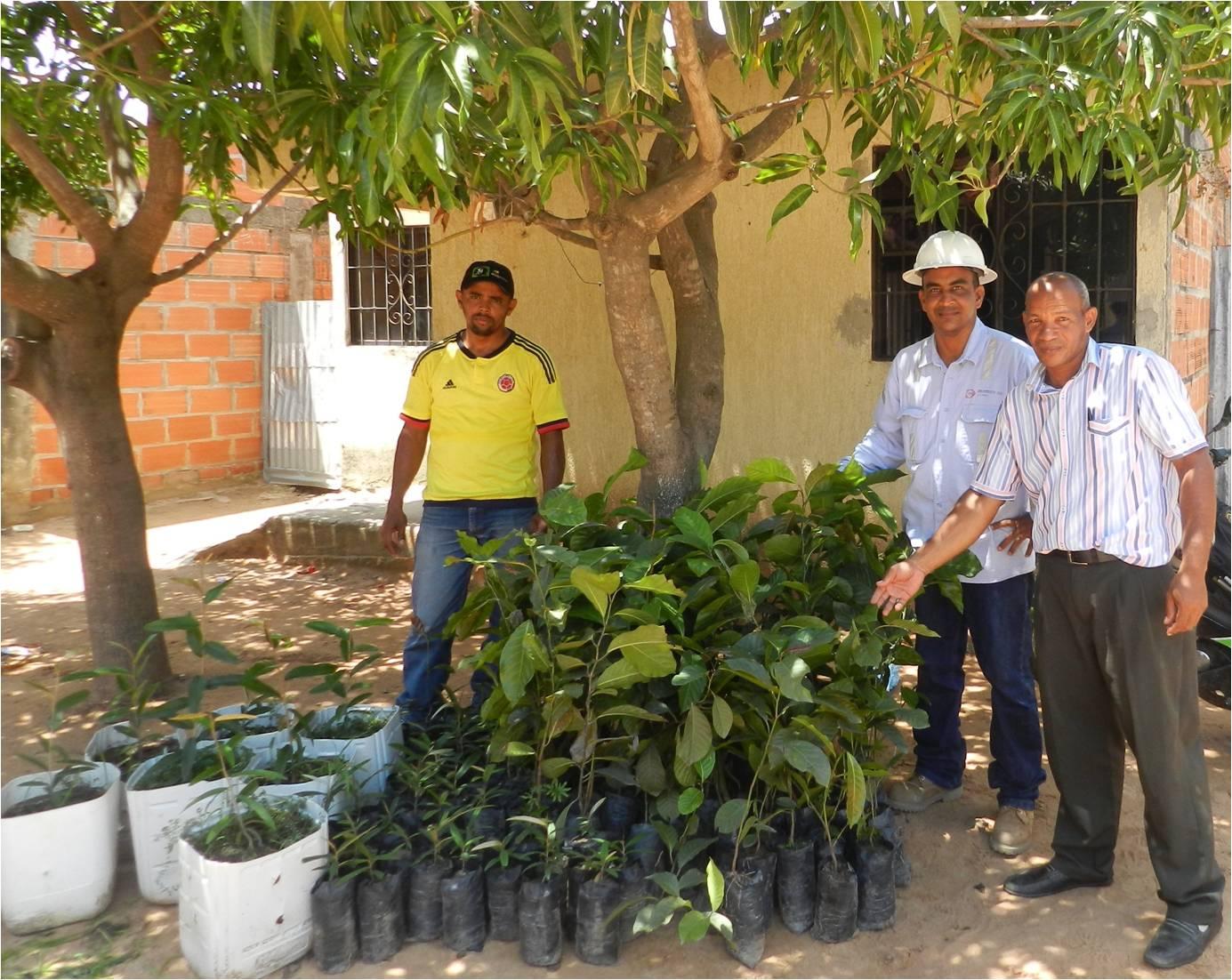 *120 árboles recibieron los habitantes del barrio Comcaja del corregimiento de La Loma.