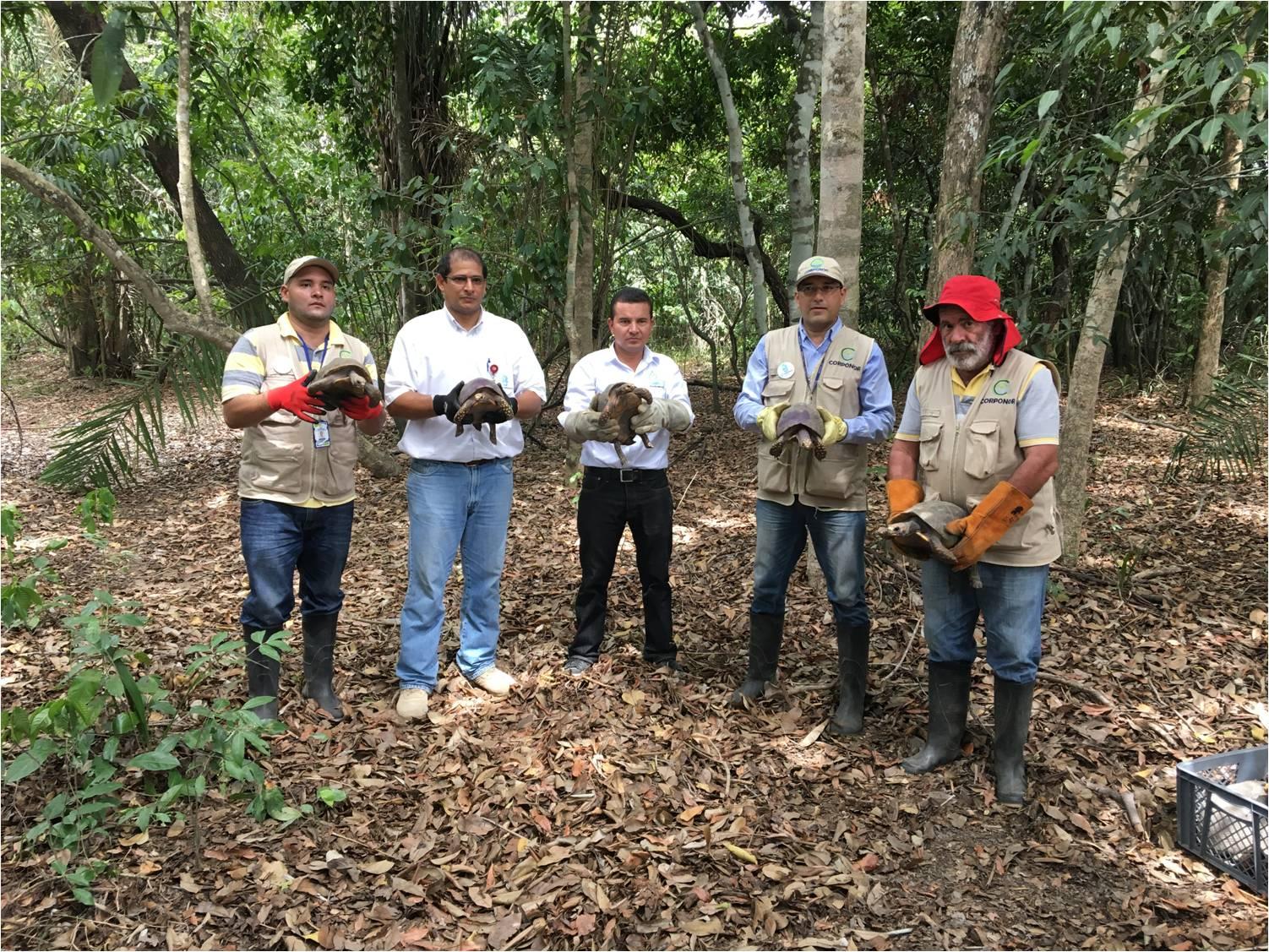 En predios de la compañía minera Drummond Ltd., 80 tortugas Morrocoy fueron liberadas
