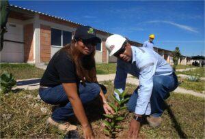 Programa de Arborizacion 3 DLTD_