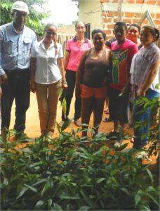 Programa de arborizacion3_DLTD