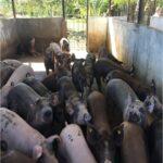 Unidades de negocio para familias rurales en Boqueron2_DLTD