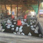 Unidades de negocio para familias rurales en Boqueron3_DLTD